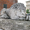The sculptures of lions near the Town Hall